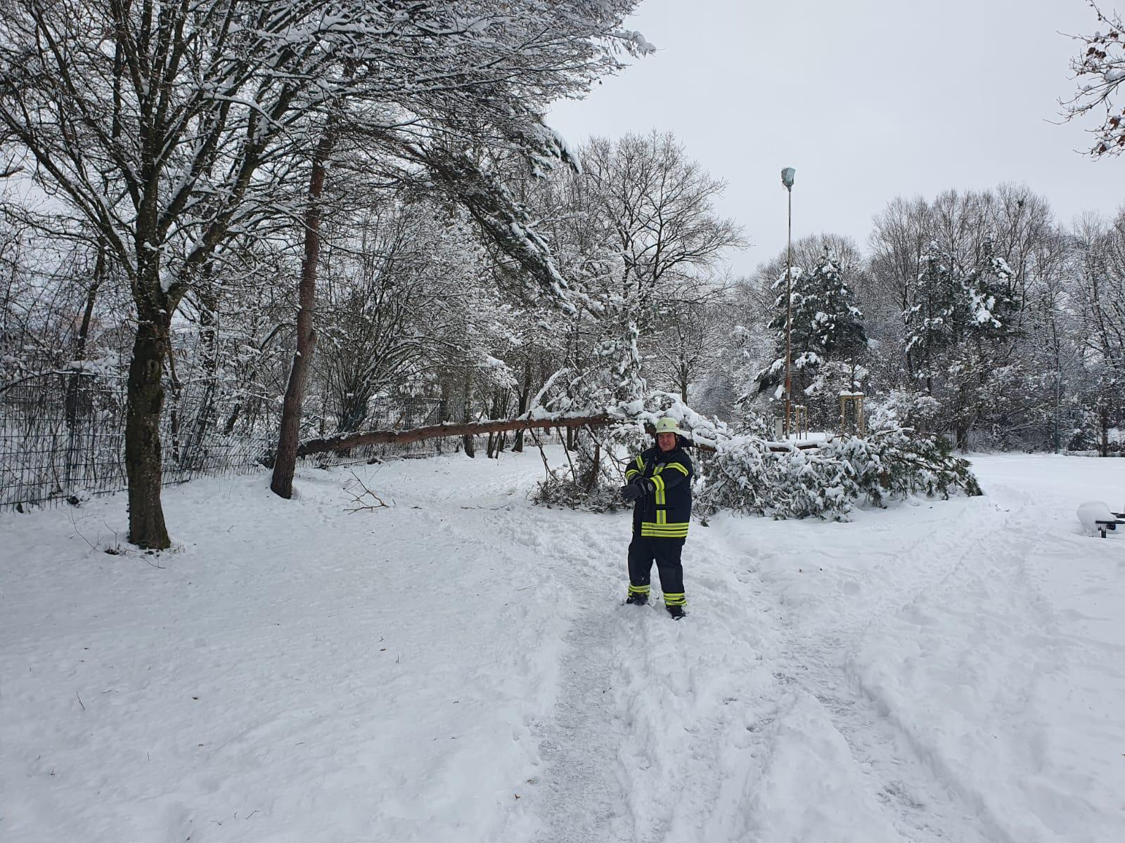 H 1 – Baum auf Weg gestürzt